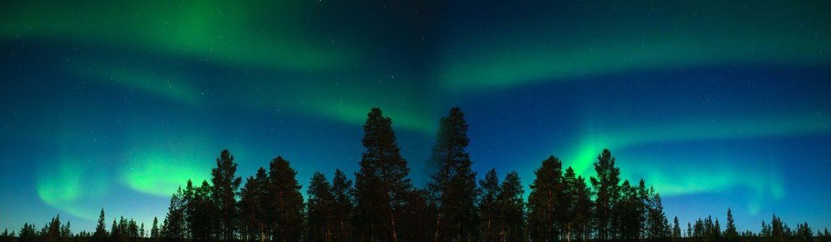 grüne Polarlichter in Finnland hinter einer Waldgruppe