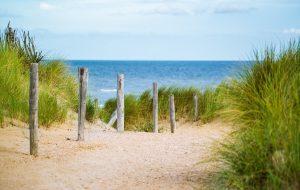 Düne Ostsee mit Gräsern und Holzpfählen